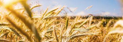 Volvo Trucks Transportlösungen für die Landwirtschaft