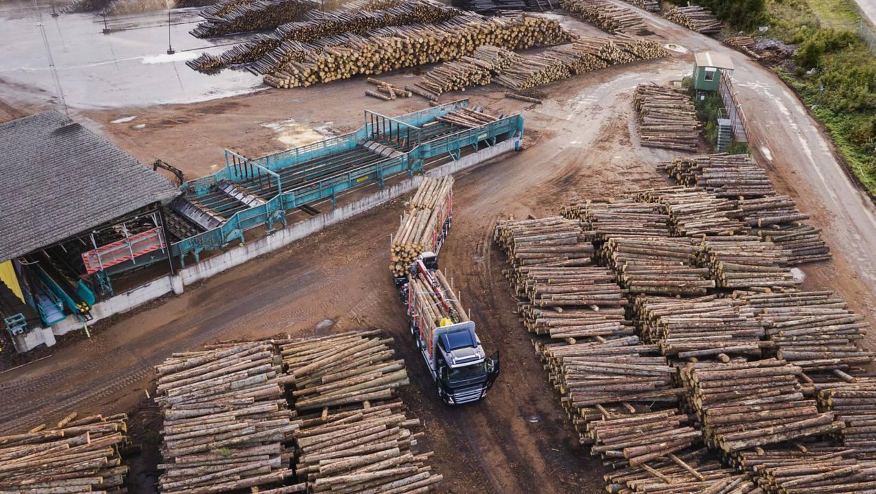 Bomen- en houttransport