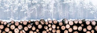 Soluciones de Volvo Trucks para la silvicultura y el transporte de madera